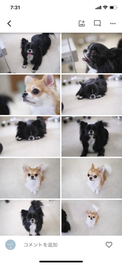 犬の成長アルバム